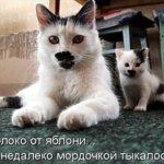 Прикольные животные