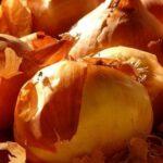 Луковая шелуха для огорода или сада, применение и ее полезные свойства