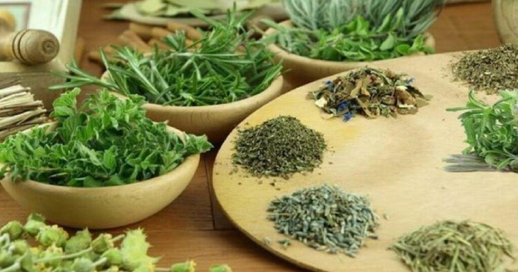 Вместо таблеток: эффективные жаропонижающие лекарственные растения