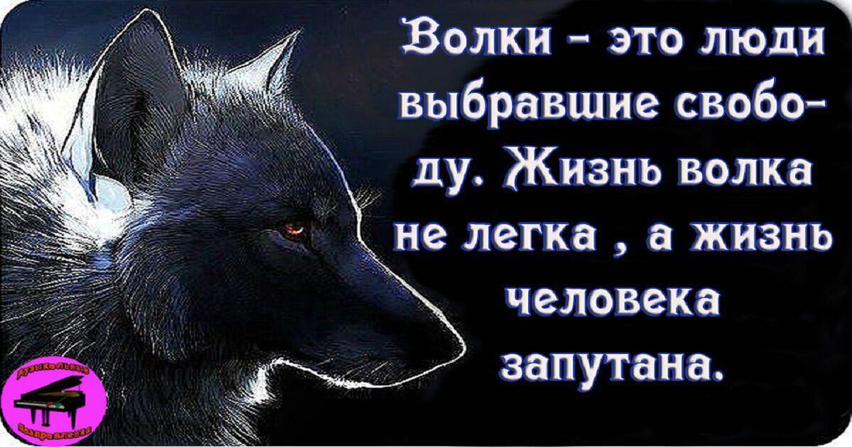Олег Винник – Волчица