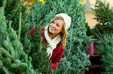 «В лесу она росла…»: правила выбора новогодней елки