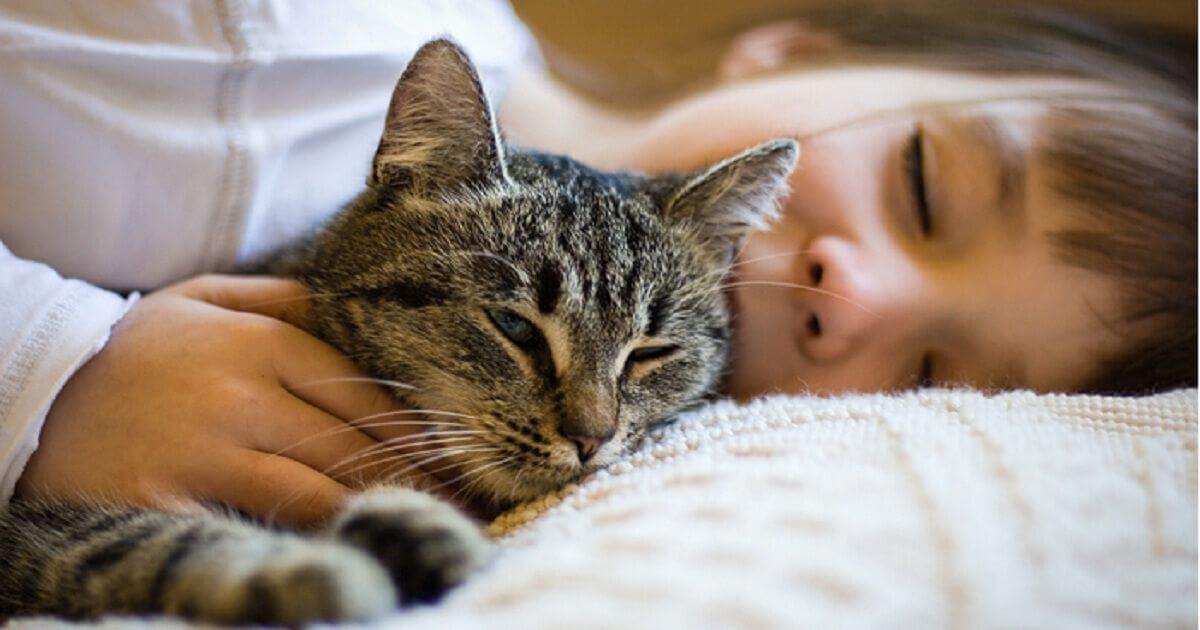 Ученые объяснили, как коты продлевают нам жизнь