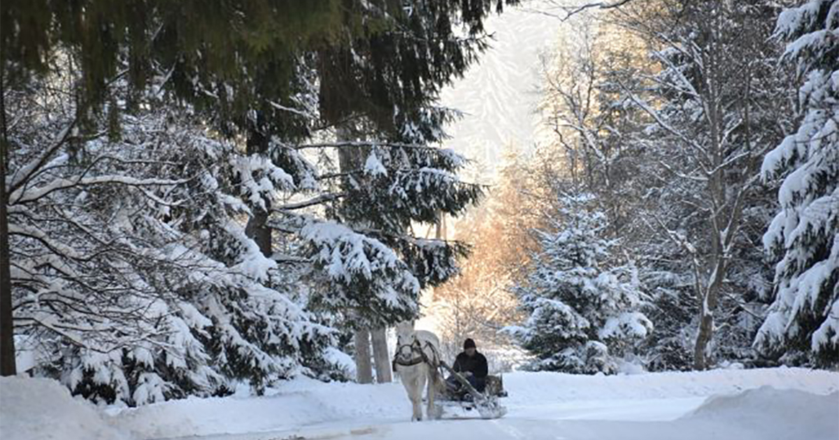 Самые красивые фото природных чудес Украины зимой