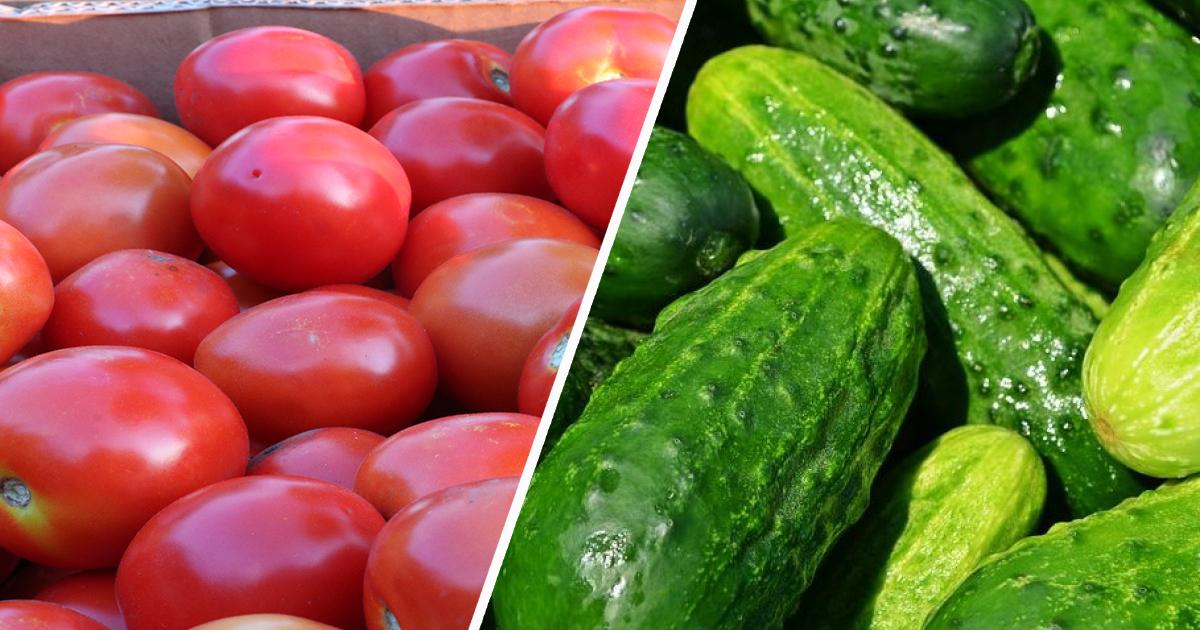 Как увеличить урожайность огурцов и томатов